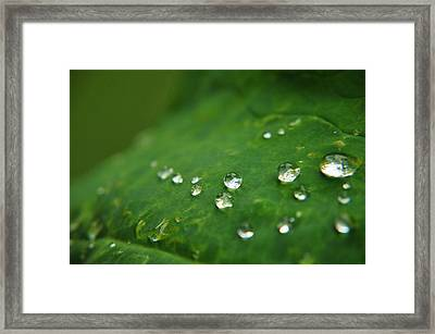 Tear Drops From Heaven  Framed Print