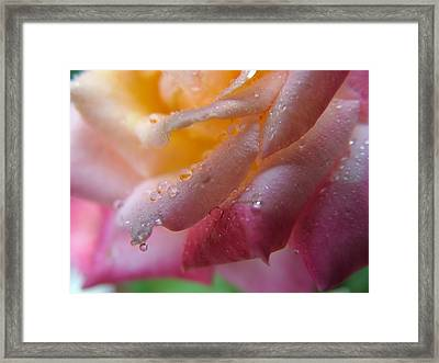 Framed Print featuring the photograph Teardrop Of A Rose by Kathy Churchman