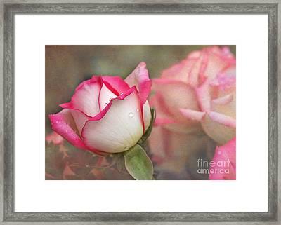 Tears In The Garden Framed Print by Sabrina L Ryan