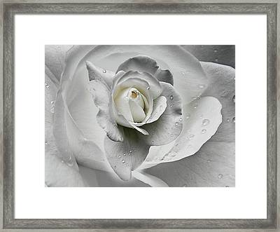 Tears In The Rosegarden Framed Print by Joachim G Pinkawa