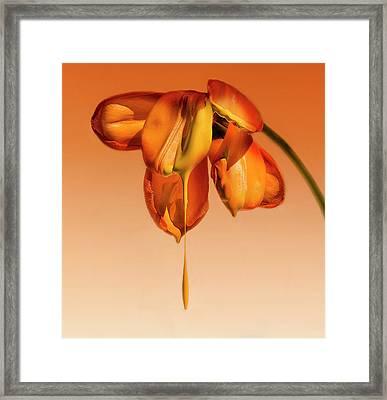 Tears Of A Flower Framed Print
