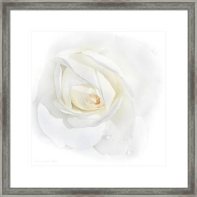 Tears White Rose Flower Framed Print by Jennie Marie Schell