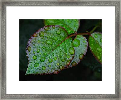 Teary Rose Leaf Framed Print by Juergen Roth