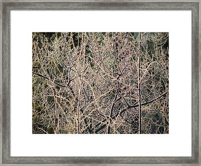 Framed Print featuring the photograph Technicolour Frost by Brian Boyle