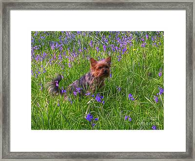 Teddy Amongst The Bluebells Framed Print