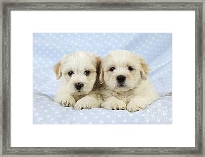 Teddy Bear Puppy Dogs Framed Print