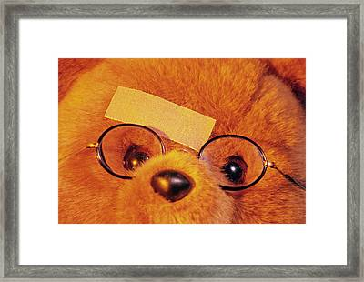 Teddy Bear With Plaster Framed Print by Tony Craddock/science Photo Library