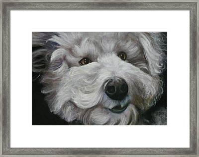 Framed Print featuring the painting Teddy The Bichon by Melinda Saminski