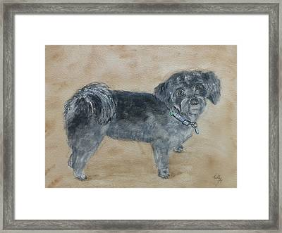 Framed Print featuring the painting Maltese Puppy  by Kelly Mills