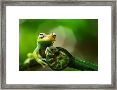 tree frog Hypsiboas punctatus Framed Print
