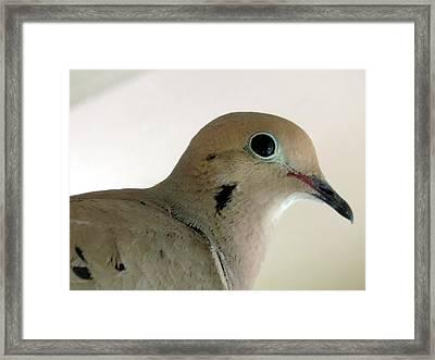 Teenage Dove Framed Print