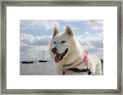 Framed Print featuring the photograph Tehya by Vicki Spindler