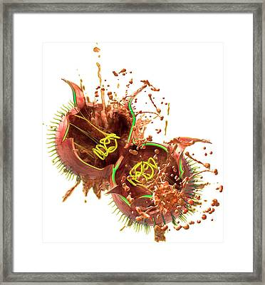 Teixobactin Destroying Bacterium Framed Print by Claus Lunau
