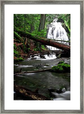 Temperate Old Growth Framed Print