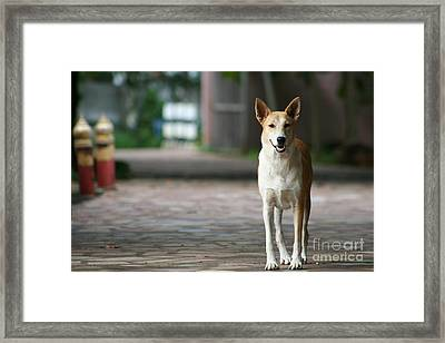 Framed Print featuring the photograph Temple Dog by Nola Lee Kelsey