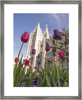 Temple Tulips Framed Print