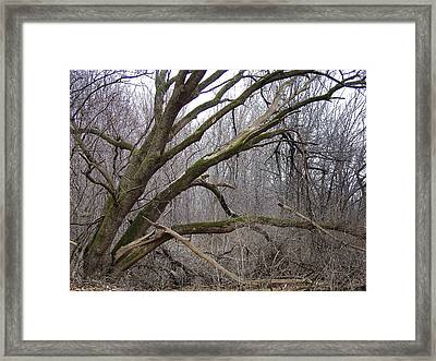 Temporal Motif At Year's End Framed Print