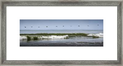 Framed Print featuring the photograph Ten Pelicans by Steven Sparks