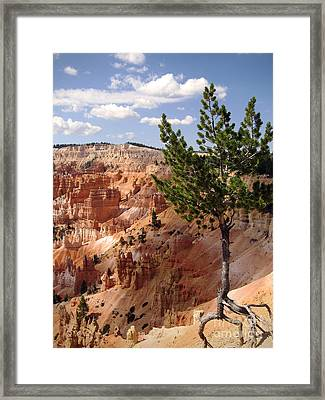 Framed Print featuring the photograph Tenacious by Meghan at FireBonnet Art