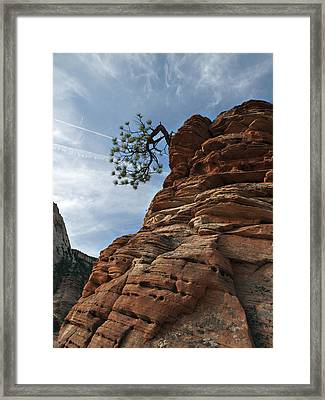 Framed Print featuring the photograph Tenacity by Joe Schofield