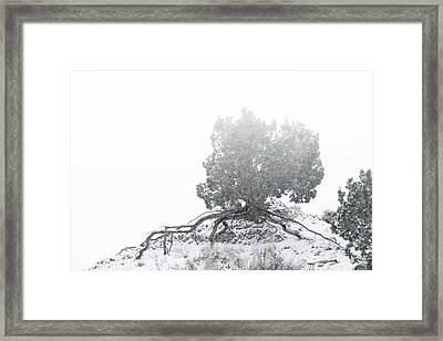 Tenacity Framed Print by Mary Lee Dereske