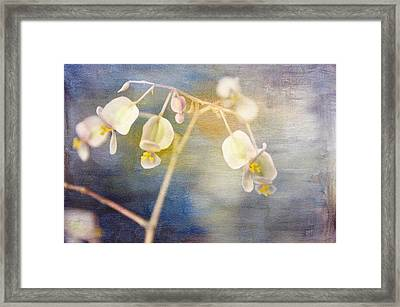 Tender Begonia Framed Print by Jan Amiss Photography