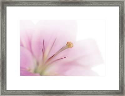 Tender Lily Framed Print by Melanie Viola