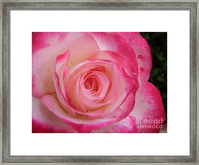 Tender Framed Print