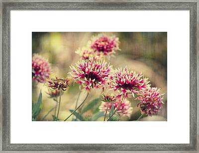 Tender Pink Blooms Framed Print by Melanie Lankford Photography