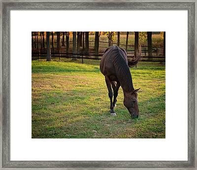 Tender Spring Grass Framed Print