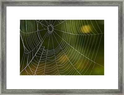 Tender Web Framed Print by Christina Rollo