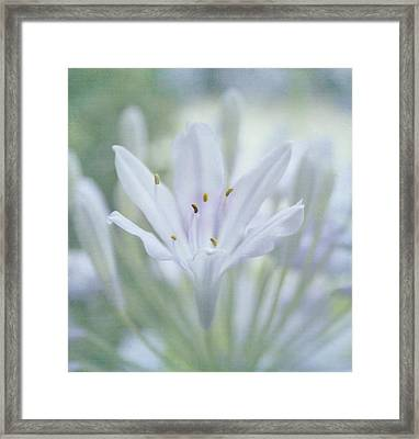 Tenderly Framed Print by Kim Hojnacki