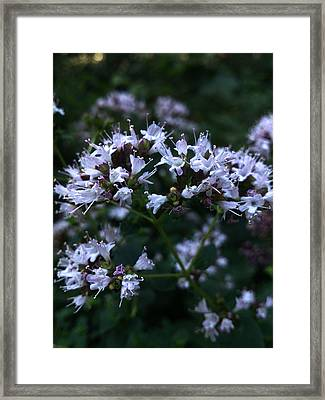 Tenderness Framed Print by Lucy D