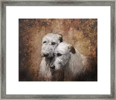 Tenderness Framed Print by Mary OMalley