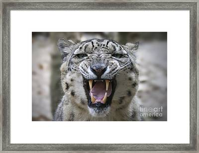 Tenderness Framed Print by Maurizio Bacciarini