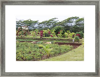 Framed Print featuring the photograph Tending The Land by Suzanne Luft
