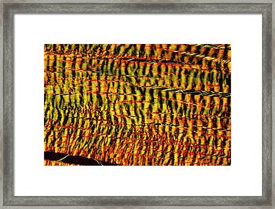 Tendon Framed Print by Microscape