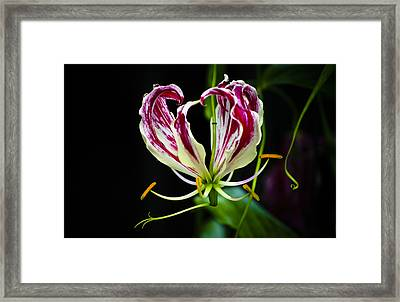 Tendrils Of My Mind Framed Print by Christi Kraft