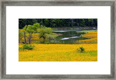 Tennessee Black-eyed Susan Field Framed Print