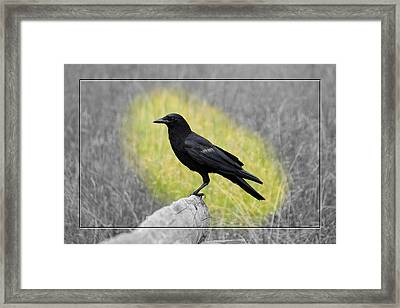 Tennessee Crow Framed Print