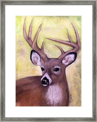 Tennessee Wild Life - Buck Framed Print