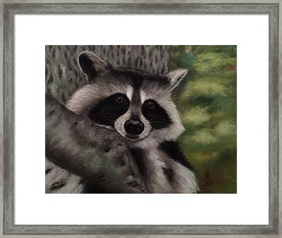 Tennessee Wildlife - Raccoon Framed Print