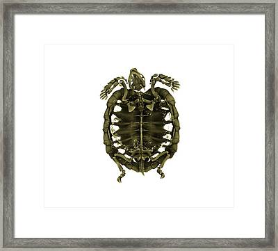 Tent Tortoise Framed Print
