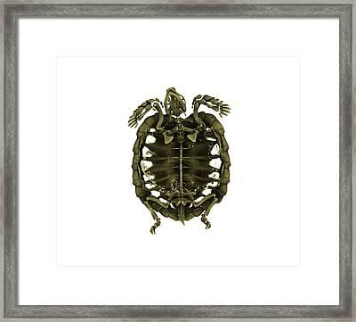 Tent Tortoise Framed Print by Dan Sykes/natural History Museum, London