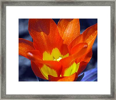 Tequila Sunrise 2 Framed Print by Leslie Cruz