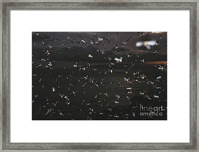 Termite Mating Swarm Framed Print by Gregory G. Dimijian, M.D.