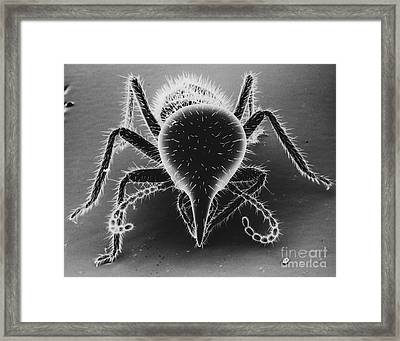 Termite Soldier Framed Print by David M. Phillips