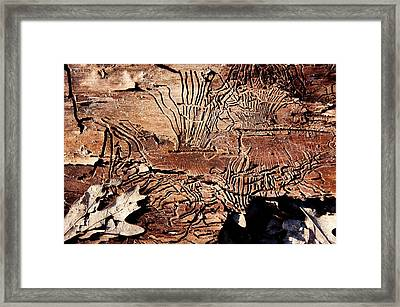 Termite Trails Framed Print by Kevin Grant