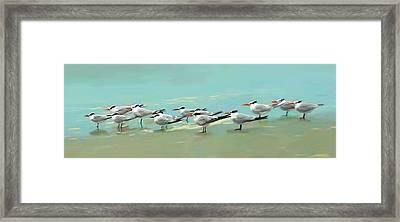 Tern Tern Tern Framed Print