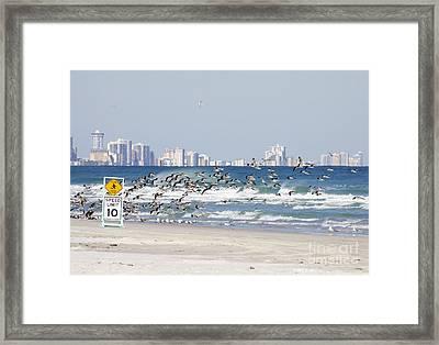 Terns On The Move Framed Print by Deborah Benoit